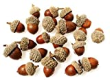 Mesh Bag of 75 Natural Washed & Dried Acorns - Decorate for Fall & Autumn