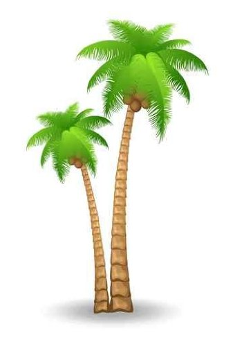 "Palm Tree - 60""H x 40""W - Peel and Stick Wall Decal by Wallmonkeys"