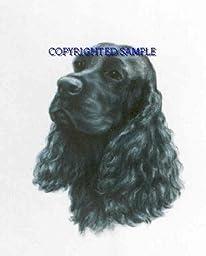 Cocker Spaniel - Portrait by Cindy Farmer, Black