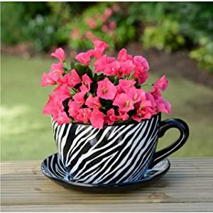 Giant Tea Cup And Saucer Planter Zebra Garden Outdoors