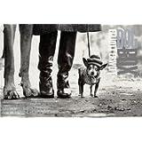 Dog Box - Horizontal Cards ~ Elliott Erwitt