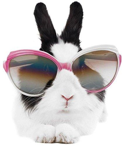 autocollant-sticker-voiture-moto-lapin-lunette-drole-deco-enfant