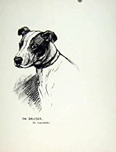 Amazon.com: Dog Sketch Fine Old Drawing Pencil C1936 Pet Animal Art
