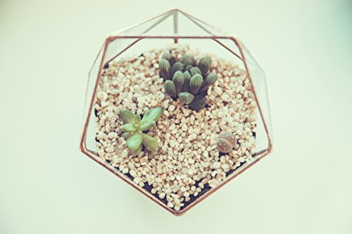 Mini Succulent Terrarium, Wedding box, Geometric Terrarium