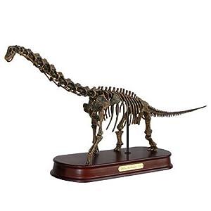 Dinosaur Brachiosaurus (Skeleton): Science Fossils: Amazon