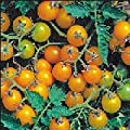 Tomato Currant Yellow Mini D4020CHTO (Yellow) 500 Open-Pollinated Seeds by David's Garden Seeds