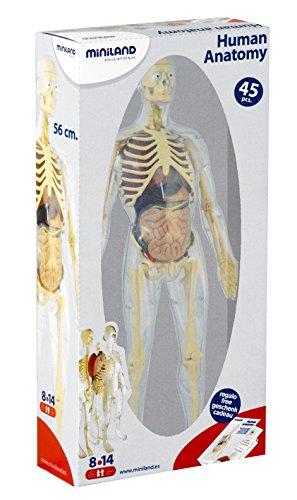 miniland-educational-99060-anatomia-humana