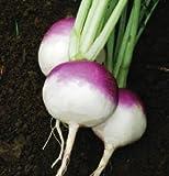 Turnip Purple Globe White Top D705A (Purple) 500 Organic Seeds by David's Garden Seeds