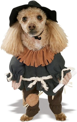 wizard of oz scarecrow. Wizard of Oz Scarecrow Dog