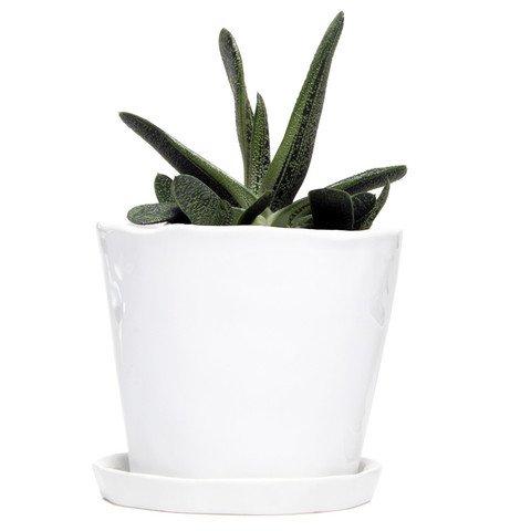 Chive - Big Tika Succulent Planter - 5