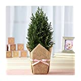 Deluxe Growing Tree For Baby Girl A Growing Tree For Baby Girl