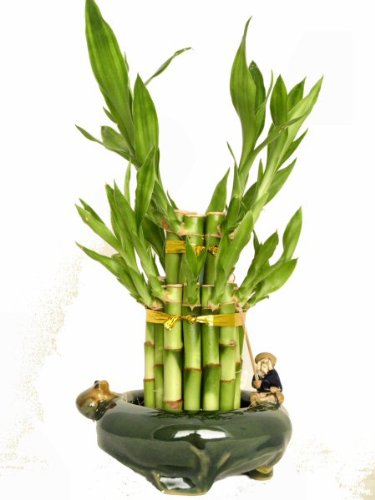 Kl Design & Import - 2 Tier Bamboo Tower In A Hand Made Ceramic Fisherman And Frog Vase *Perfect Gift*