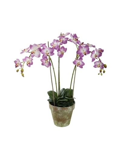Winward Faux Phalaenopsis Orchid Bunch in Terracotta Pot, Pink As You See