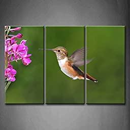Modern Home Decoration painting 3 Panel Wall Art Purple Allens Hummingbird In Flight At A Flower With A Green Background Pictures Print On Canvas Animal The Picture piece