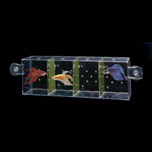 Penn-Plax World Betta Fish Condo