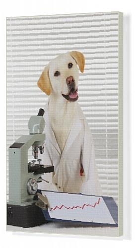Canvas Print Of Jd-22038 Dog Yellow Labrador Wearing Lab Coat With Microscope From Ardea Wildlife Pets