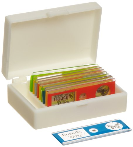American Educational Plastic Insect Microscope Slide Set In Plastic Storage Box (Bundle Of 50)