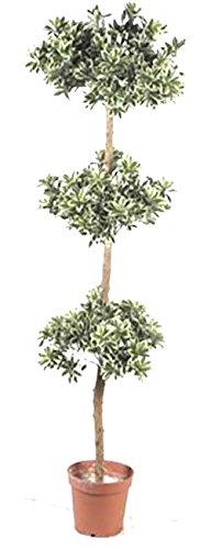 Tierra Garden 52 93033 Artificial Persian Topiary Tree 5
