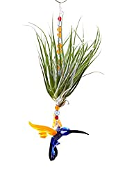 Handmade Glass Hummingbird Figurine with Living Air Plant and Crystal Beading - Great Gift for Birthdays and Mother\'s Day