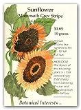 Mammoth Grey Stripe Sunflower Seeds - 8 grams - Annual