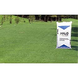 芝の種(業務用):西洋芝ペレニアルライグラス・ヘイロー1kg[草丈30〜50cm 用途により12〜100平米分][極濃緑色]