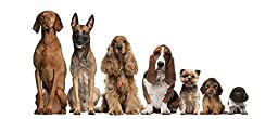 Wallmonkeys WM304782 Group of Brown Dogs Sitting Peel and Stick Wall Decals (24 in W x 10 in H)