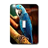 lsp_954_1 Birds - Hyacinth Macaw - Light Switch Covers - single toggle switch