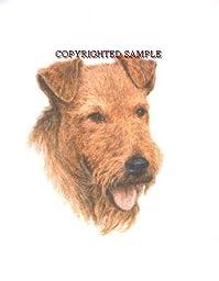 Irish Terrier - Portrait by Cindy Farmer