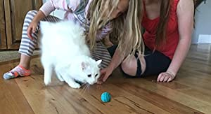 Pet Pizazz 100% Wool Eco-friendly Cat Ferret Ball Toy 6-Pack