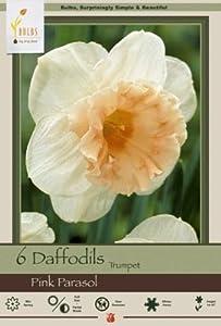 Honeyman Farms 1729 Narcissus Pink Parasol Pack of 10 Bulbs