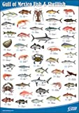 Gulf of Mexico Fish and Shellfish