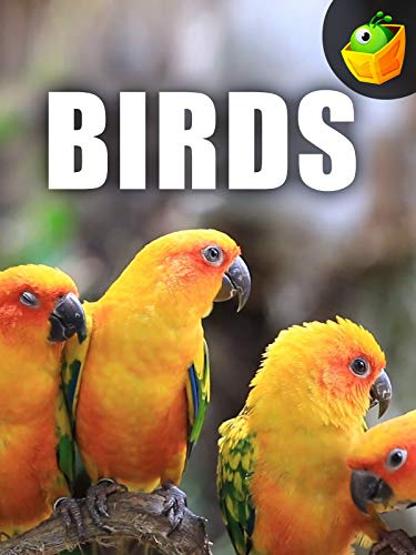 Birds on Amazon Prime Video UK