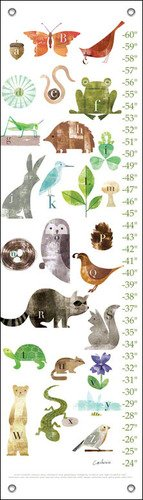 Oopsy Daisy Forest Friends A to Z Maria Carluccio Growth Charts, 12 x 42""