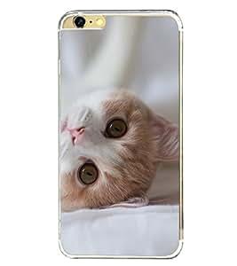 Cute Cat 2D Hard Polycarbonate Designer Back Case Cover for Apple iPhone 6S