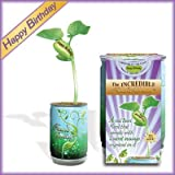 """Happy Birthday"" Planter Kit - Just Add Water and Watch Your ""Happy Birthday""..."