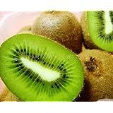 100 KIWI FRUIT Kiwi Actinidia Vine Seeds (Kiwifruit / Hardy Kiwi / Tara Vine / Yang Tao / Chinese Gooseberry / Chinese Strawberry)