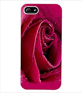 ColourCraft Beautiful Rose Design Back Case Cover for APPLE IPHONE 5