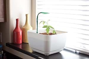 Bonsai Tree Indoor Grow Light LiteStik - Joebonsai