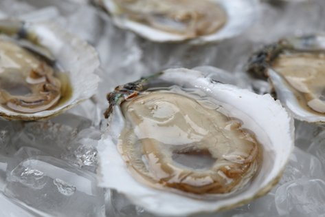 Fresh Chesapeake Bay Oysters