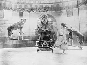 Amazon.com: Female Lion Tamer Performing Photographic Poster Print
