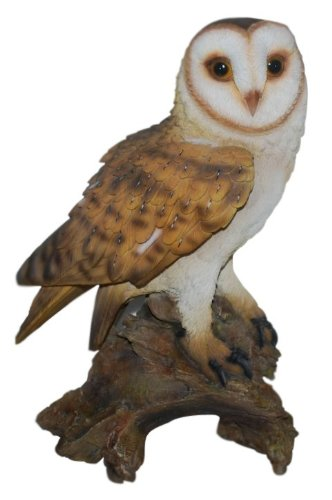 Vivid Arts Real Life Barn Owl