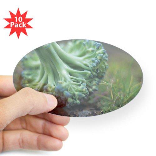 Vitamins In Broccoli