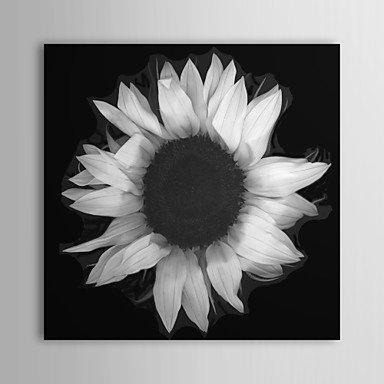 pitengtm-toiles-tendues-tournesol-floral-par-sara-catena