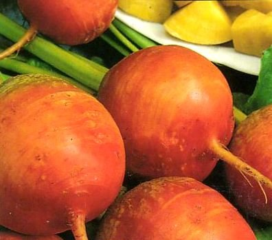 Golden Beet 200 Seeds - GARDEN FRESH PACK!