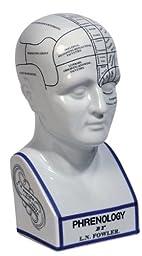 Authentic Models Porcelain Phrenology Head Bust