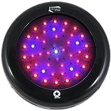 Lighthouse Hydro BlackStar Flowering LED Grow Light, 135-watt