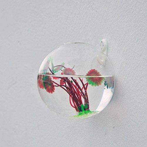 vase en verre transparent mural forme de boule pour plante. Black Bedroom Furniture Sets. Home Design Ideas