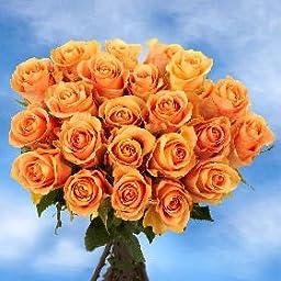 Peach Cuenca Roses | 50 Peach Roses