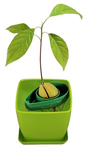 avoseedo-set-with-plant-pot-green