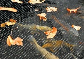 Hozelock 6m x 4m Pond Cover Net